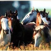 Пользование крытым манежем для лошадей фото