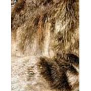 Индивидуальный пошив изделий из меха бобра фото