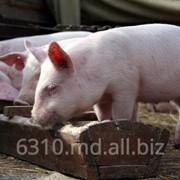 Комбикорма для свиней в Молдове фото
