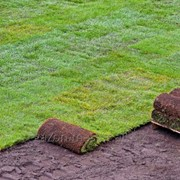 Услуга подбора семян трав для газонов фото