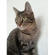 Happy cats оказывает услуги по уходу за кошками на время отпуска. фото