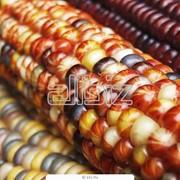 Проверка на наличие ГМО в пищевой продукции фото