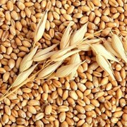 Пшеница на экспорт, grâu, wheat, продам пшеницу