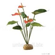 Террариумное растение Hagen Exo Terra Anthurium Bush фото