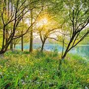 """Фотообои """"Spring Lake"""" 254х368 8-524 NG 2000000405575 фото"""