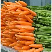 Морковь купить оптом фото