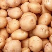 Картофель фотография
