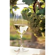 Виноматериал из белых сортов винограда фото