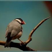 Медицинская помощь птицам фото