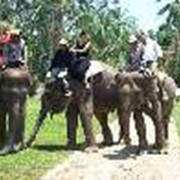 Экскурсия в Парк слонов на Бали фото