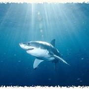 Обучение навыкам подводной охоты фото