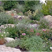 Каменистый сад фото