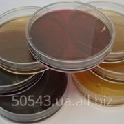 Агар мікробіологічний (Агар-Агар) фото