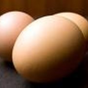 Яйца куриные производства ТОО Бурабай кус фабрикасы фото