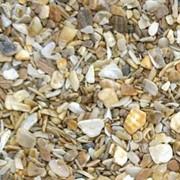Песок морской ракушки фото
