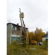 Снос деревьев фото
