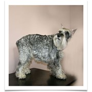 Тримминг собак фото