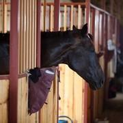 Аренда денников для спортивных и конкурных лошадей фото