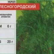 Семена Укропа Лесногородский, аллигатор. Доставка с Одессы фото