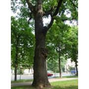 Пропитка и защита дерева фото