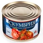 Скумбрия атлантическая в томатном соусе фото
