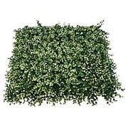 Трава искусственная MZCGZ-06048 Самшит Бело-Зелёный фото