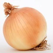 Лук томат оптом фото