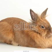 Натуральный мех кролика рекса, ферма фото