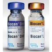 Биокан ЧГПП+Л, Biocan Dhppi + L, 1д фото