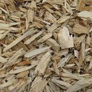 Щепа. Сырье древесное. фото