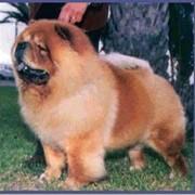Обработка шерсти у собак фото