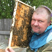Пчелопакеты 3+1 фото