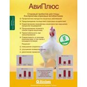 Пробиотики АвиПлюс фото