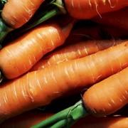 Морковь оптом от производителя фото