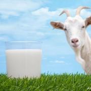 Молоко козъе фото