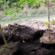 Деревья: уход, посадка, спилка, обрезка фото