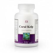 Антиоксидант Корал Келп. Coral Kelp фото