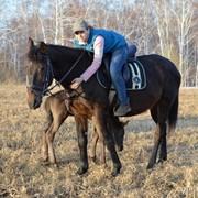 Кибитка. Прокат лошадей, обучение верховой езде фото