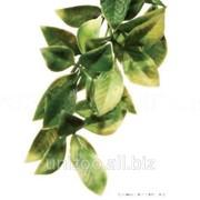 Террариумное растение Hagen Exo Terra Mandarin (M) фото