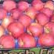 Аренда помещений для хранение фруктов фото