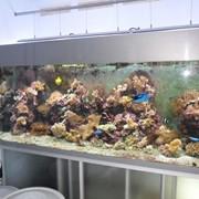Морские аквариумные рыбки фото