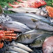 Морепродукты из Ирана фото