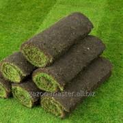 Удаление газонного войлока фото