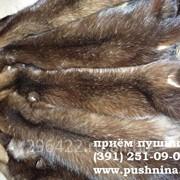 Закупка:мех ондатры фото