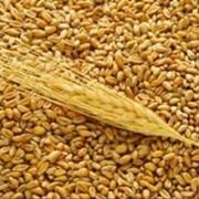 Услуги по организации закупок зерновых и масличных культур фото