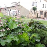 Подбор растений для озеленения сада фото