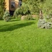 Благоустройство и озеленение фото