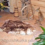 Овечья шкура - шкура овцы (шерсть средней длины) 11 фото