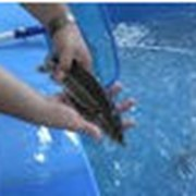 Консультационные услуги в области организации и ведения рыбоводного бизнеса, оборудование для разведения рыбы фото