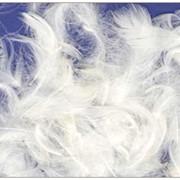 Пух и перья гуся фото